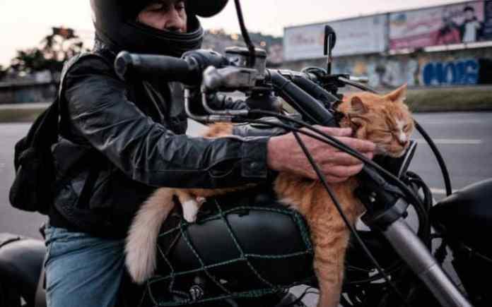 Motorcycle Cat