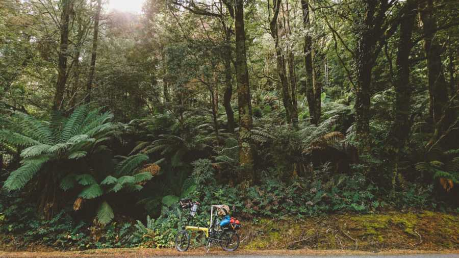 Tasmanian Forest with Bike