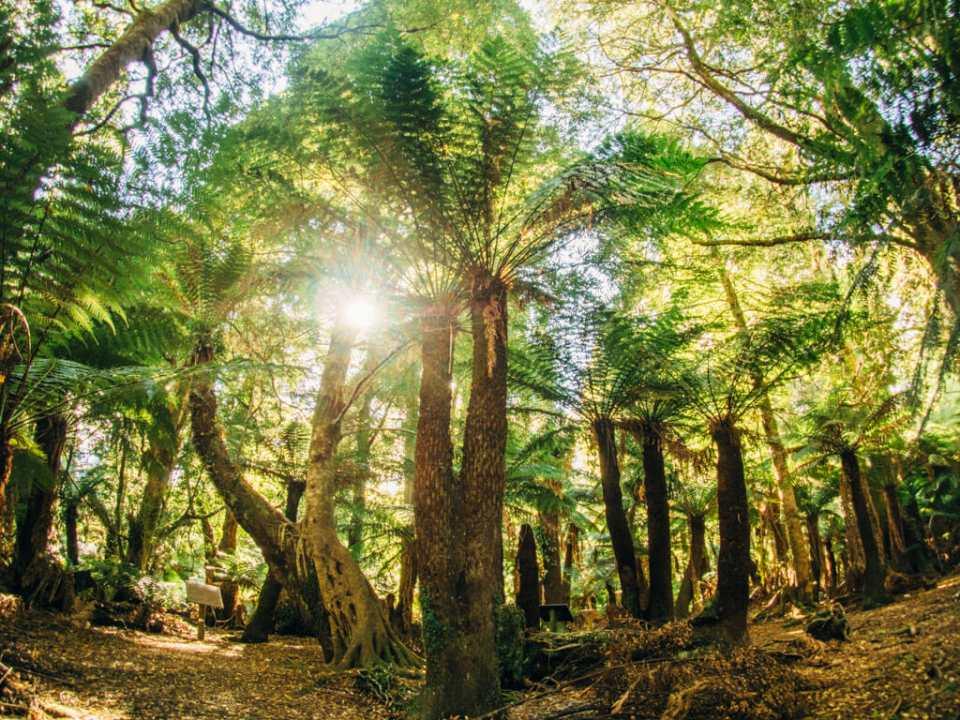 Deep into the Tasmanian rainforest