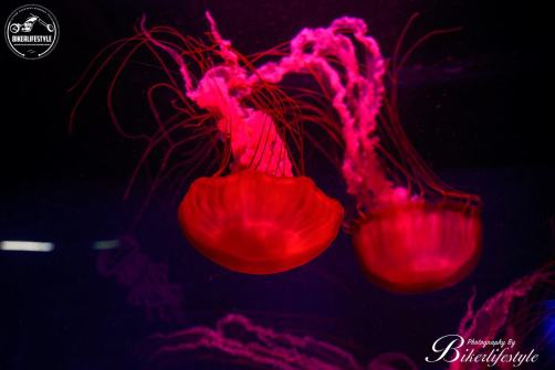 Sealife-centre-082