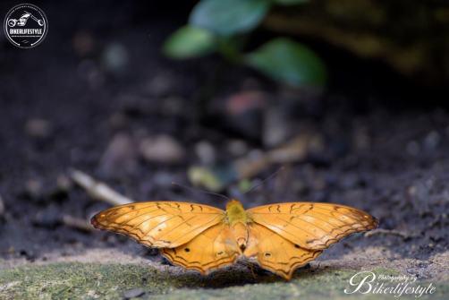 butterfly-farm030