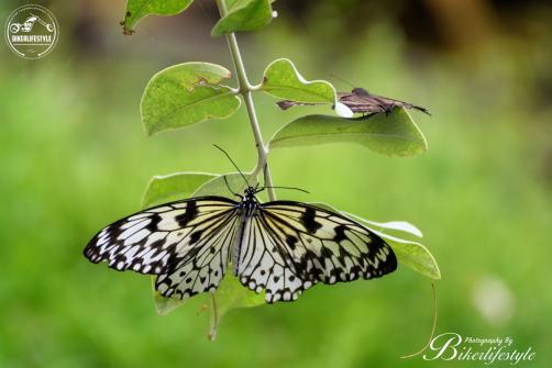 butterfly-farm119
