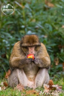 monkey-forest-and-faries-455