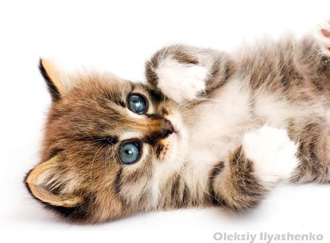 So Eine Will Ich Haben Viele Se Katzenbilder Und