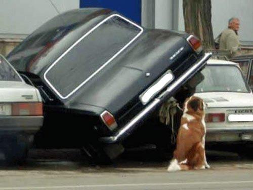 Parkplatzsuche  lustige Bilder Auto  funny pics  Bilder Blog