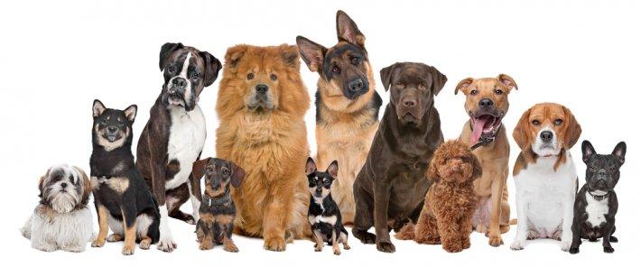 Köpekler İçin Zararlı Besinler