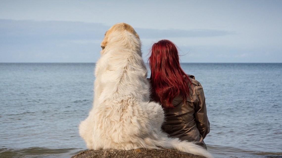Köpeklerin Beden Dili