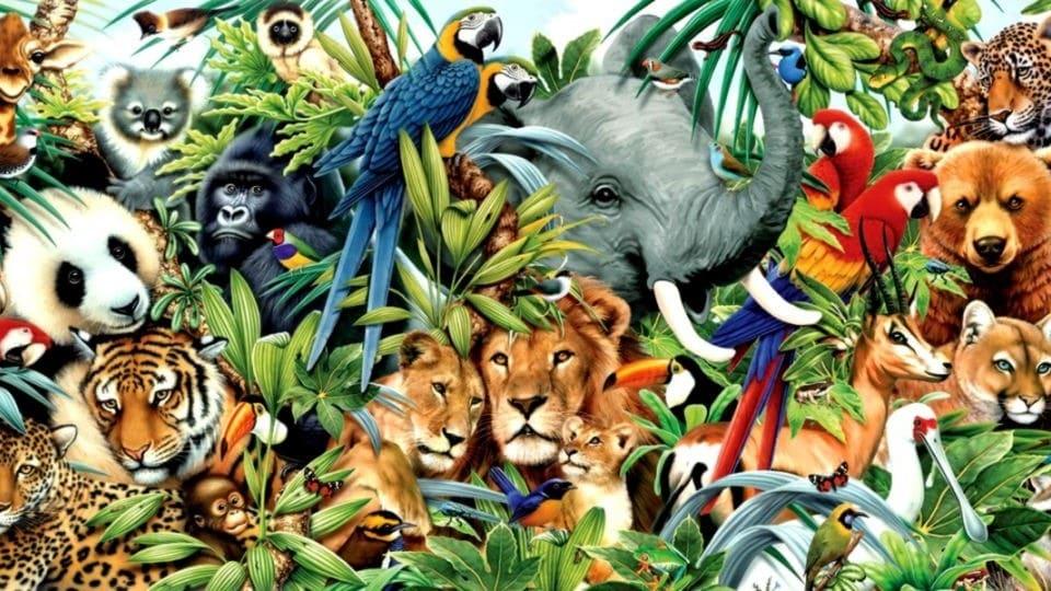 Hayvanlar Hakkında İlginç Bilgiler