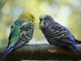 En Güzel Muhabbet Kuşu İsimleri