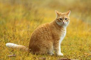 13197 yellowstar 300x200 - Skin Infections In Cats