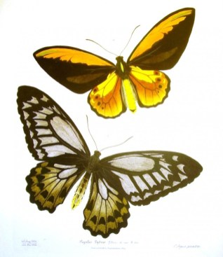 Turuncu renkli erkek kelebek ve koyu renkli dişi kelebek