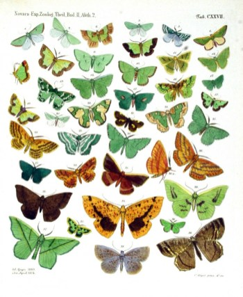 Yeşil, turuncu, kahve rengi farklı yeşil desenlerde kelebek türleri