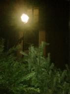 Weihnachtsbäume an jeder Ecke