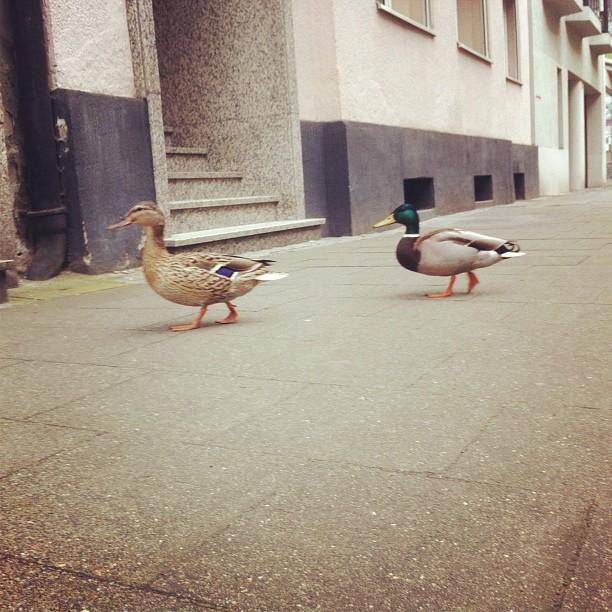 Tierwelt in der Stadt.