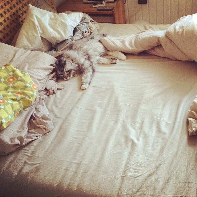 Katzen kennen wirklich keine Montage... Kommt alle gut in die neue Woche :-)