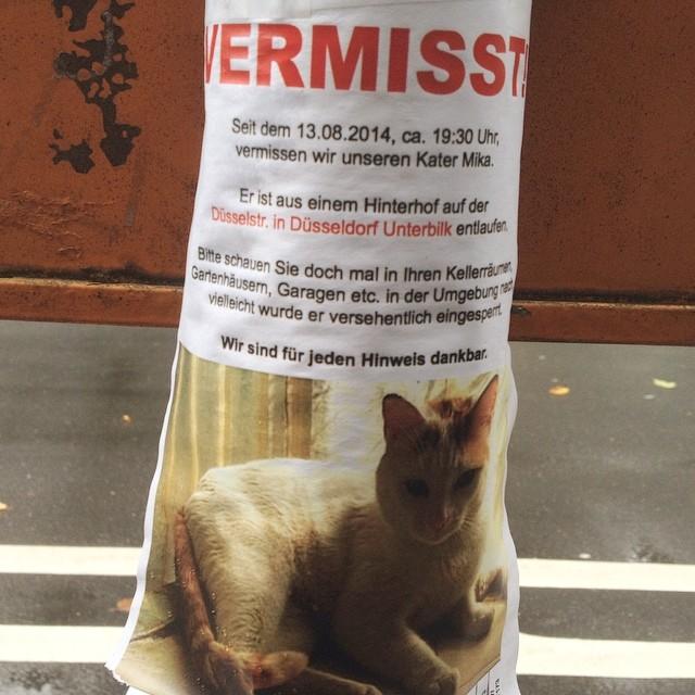 Bei uns im Viertel (Nähe Düsselstr. / LeoStatzPlatz) ist wieder eine Katze entlaufen...