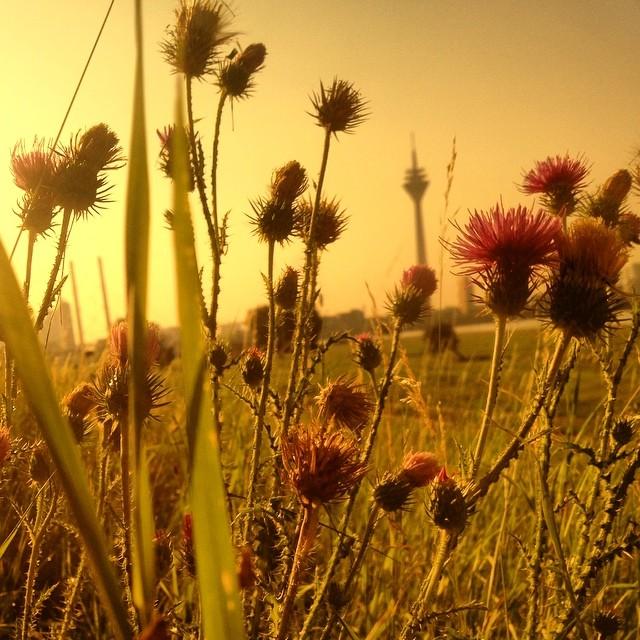 Auf der Wiese rumliegen und den Bienen bei der Arbeit zuhören – toll.