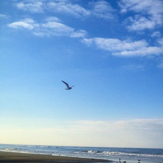Sonne. Strand. Spazieren & 'nen kühles Grolsch dabei :-)