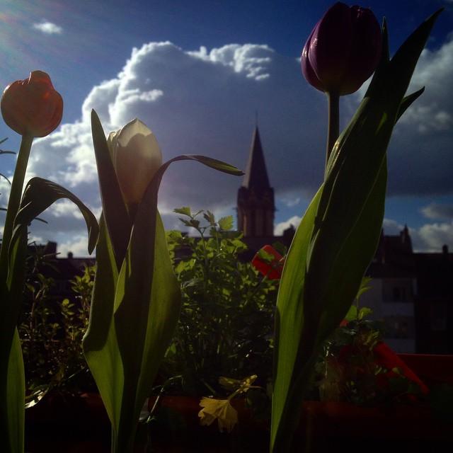 Frühlingsboten auf der Fensterbank…