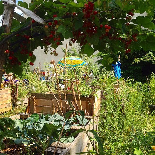 Tag der offenen Gartenpforte bei Düsselgrün