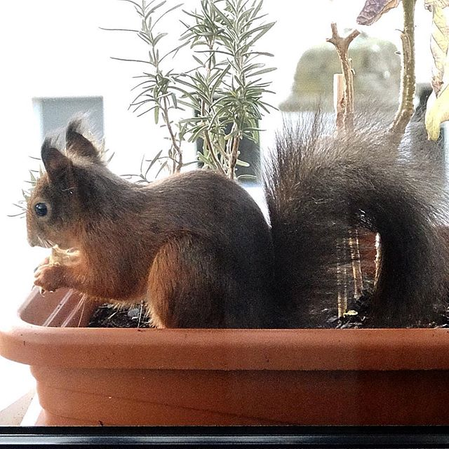 Auch Eichhörnchen brauchen mal eine Pause…