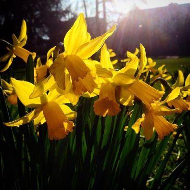 Einen ruhigen & sonnigen Sonntag  euch allen :-)