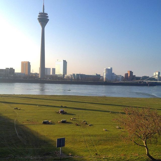 Morgens an der 'Alm' am Rhein :-)