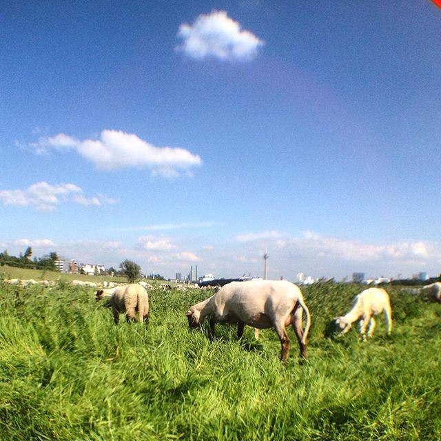Es hat ein wenig was von 'Urlaub auf dem Bauernhof' ;-)