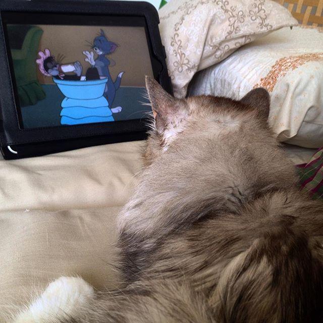 Fehlen nur noch die Katzensnacks - denn auch Katzen lieben es Serien zu schauen...