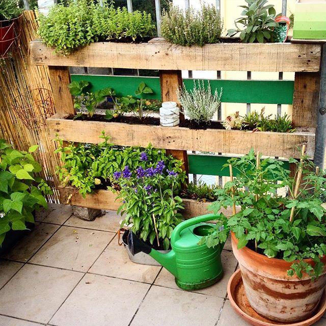 """Die ersten Monate mit dem Palettengarten sind rum - erstes Zwischenfazit: praktisch, Kräuter wachsen """"wie hulle"""", Salat geht nicht so gut, mehr Erde verwenden, einige Kräuter sind """"raumgreifender"""" als gedacht, ..."""