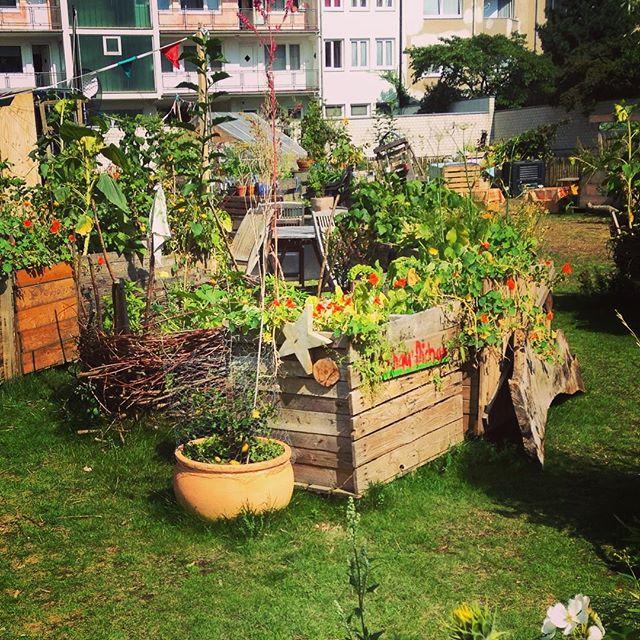 Morgen ist übrigens wieder ab 15 Uhr Gartentreffen im bei Düsselgrün - wer Lust auf ein wenig gärtnern hat ist natürlich gern gesehen :-)