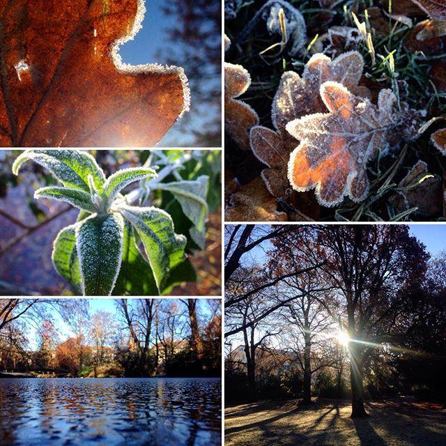Bei dem Wetter gab es nur eine Option - dick, warm einpacken und ab auf's Rad und raus in die Parks sowie ab an den Rhein... #Winter in der Stadt. #düsseldorf #bilk