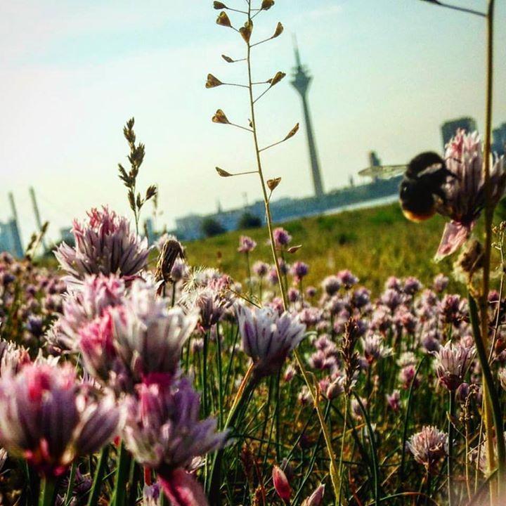 Die Bienen und Hummeln lieben diese Flächen