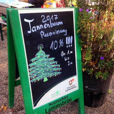 Frühbucherrabatt für Weihnachtsbäume