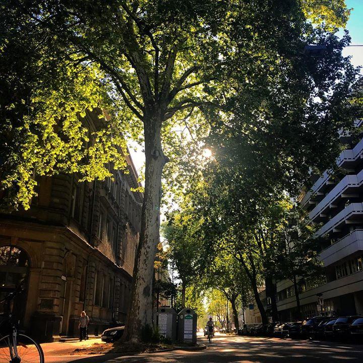 Mehr Bäume in der Stadt und alle atmen auf.