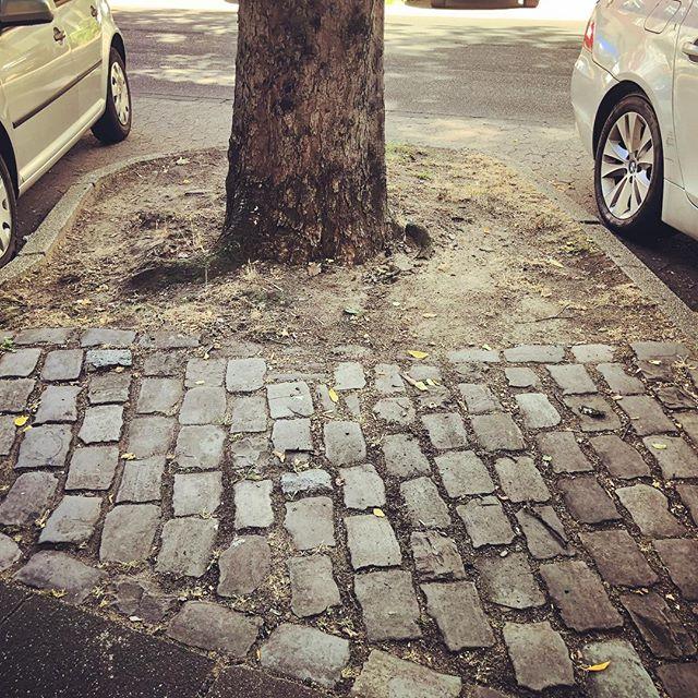 Schade das der Fokus bei den Verantwortlichen von @duesseldorf auf die Entfernung von 'wilder Wegrandbegrünung' gelegt wird und nicht auf die Pflege und Erhaltung des vorhandenen 'Straßenbegleitgrüns' (sprich:  Bäumen). Mal eine ganz verrückte Idee - Wie wäre es mal mit gießen statt zu fällen und zu häckseln? #baumfehlt #baumfehlt_dus #düsseldorf #baum