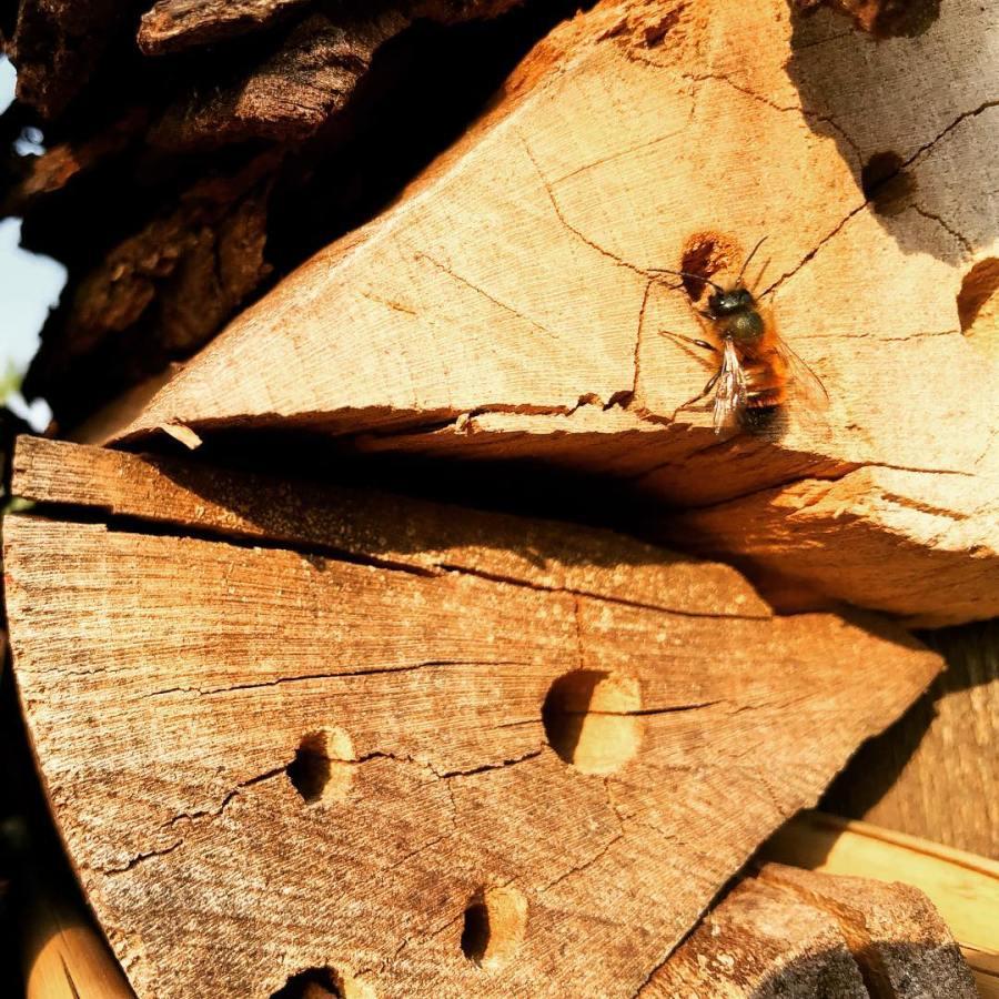 Das selbstgebaute Insektenhotel im Garten wird richtig gut angenommen und die Wildbienen schwirren seit Tagen fleißig ein und aus. Haben uns vorhin gefragt was man tuen müsste um in öffentlichen Parks und in Grünanlagen Insektenhotels installieren zu können? Giveboxen gingen ja auch – warum nicht selbstgebaute Insektenhotels? Wen muss man von der Stadtverwaltung ansprechen und was muss man dafür machen? Die Kosten sind nicht hoch, die Pflege gering, Verletzungsgefahr gering und dafür ist der Nutzen hoch. Es wird langsam mal Zeit, dass sich was bewegt und ändert
