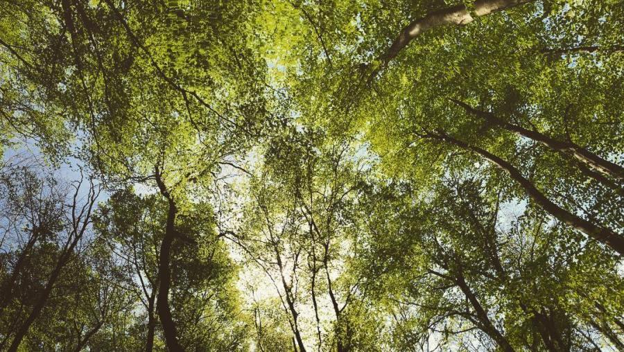 Denke dies Foto ist passend zum internationalen Tag des Baumes :-) Auf geht's – lasst uns mehr 'Stadtverwaldung' wagen und ganz besonders die Wälder und Bäume schützen die wir haben… dies gilt insbesondere für den aber auch für all die Wälder die durch die schweren Eingriff in den Grundwasserhaushalt (Absenkung des Grundwasserspiegels durch Tagebaue) wie zum Beispiel das SchwalmNetteGebiet in Gefahr sind. Wir müssen endlich anfangen mit dem Umdenken