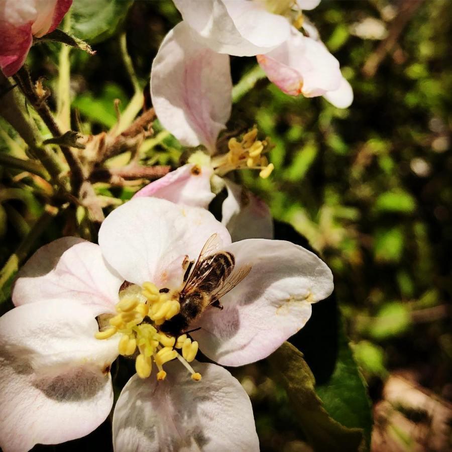 Unser Dank geht an die vielen kleinen geflügelten Helferinnen bei uns im Garten :-)