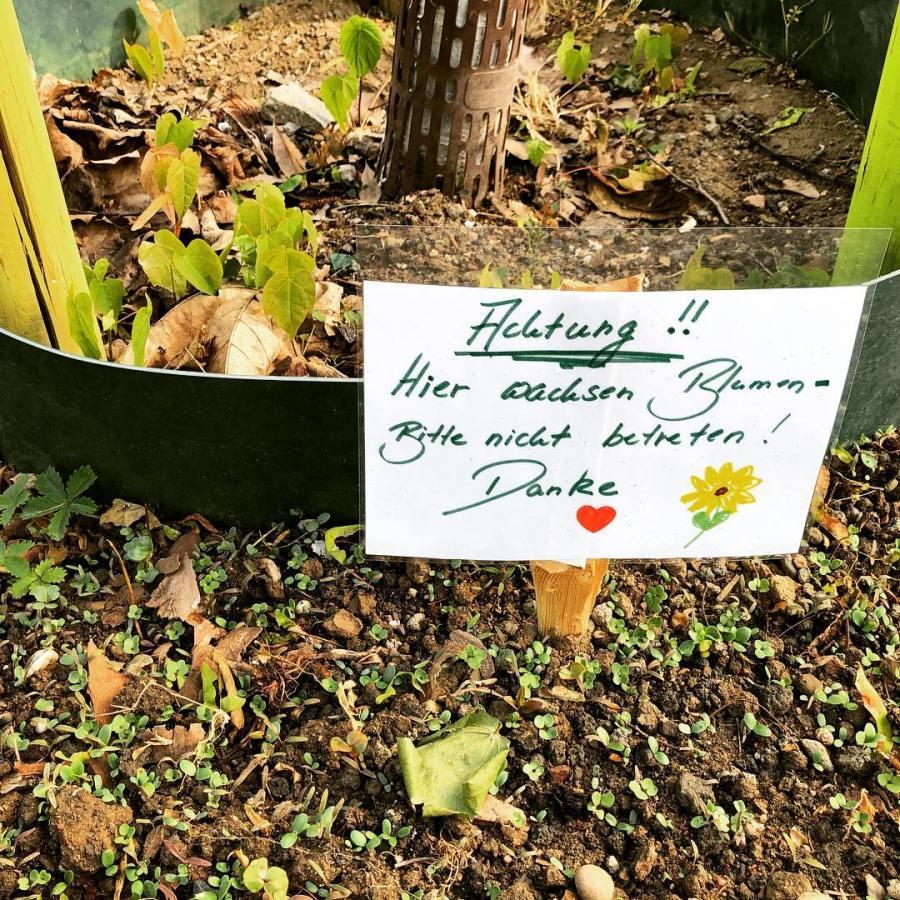 """Sag's mit Blumen :-) Hoffentlich hilft es auch gegen abgestellte Fahrräder und die Motorsensen… by the way – es soll wohl bald kleine Schildchen vom Gartenamt geben mit der Info für Pflegefirmen """"Gepflegte Baumscheibe – Bitte nicht mähen"""