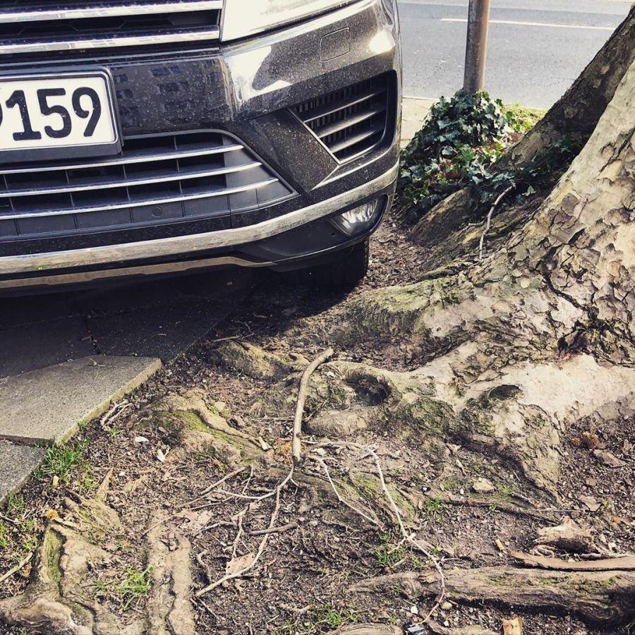 Parken wo kein Parkplatz ist – dafür braucht man also einen SUV ('Sport Utility Vehicles' werden diese Geländewagen verniedlichend genannt) in der Stadt. Die Bäume haben sowieso schon wenig Platz und stehen dauerhaft unter Stress durch Trockenheit, Schadstoffe und Streusalz – aber auch die Verdichtung des Bodens ist ein großes Problem. Es ist eine Abwärtsspirale die wir als Stadtgesellschaft endlich einmal durchbrechen müssen. Wir sind auf Bäume angewiesen – und dies nicht als dekoratives Grün, sondern als Schattenspender, Luftfilter, Sauerstoff-Produzenten, usw und wir machen es ihnen immer schwerer. Baumscheiben größer bemessen, höhere Ränder und Holme die es unmöglich machen dort zu parken und Erde auflockern und auffrischen würde echt was bringen