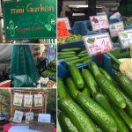 Neues vom Bauernmarkt