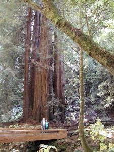 Dan & Ginger dwarfed by redwoods