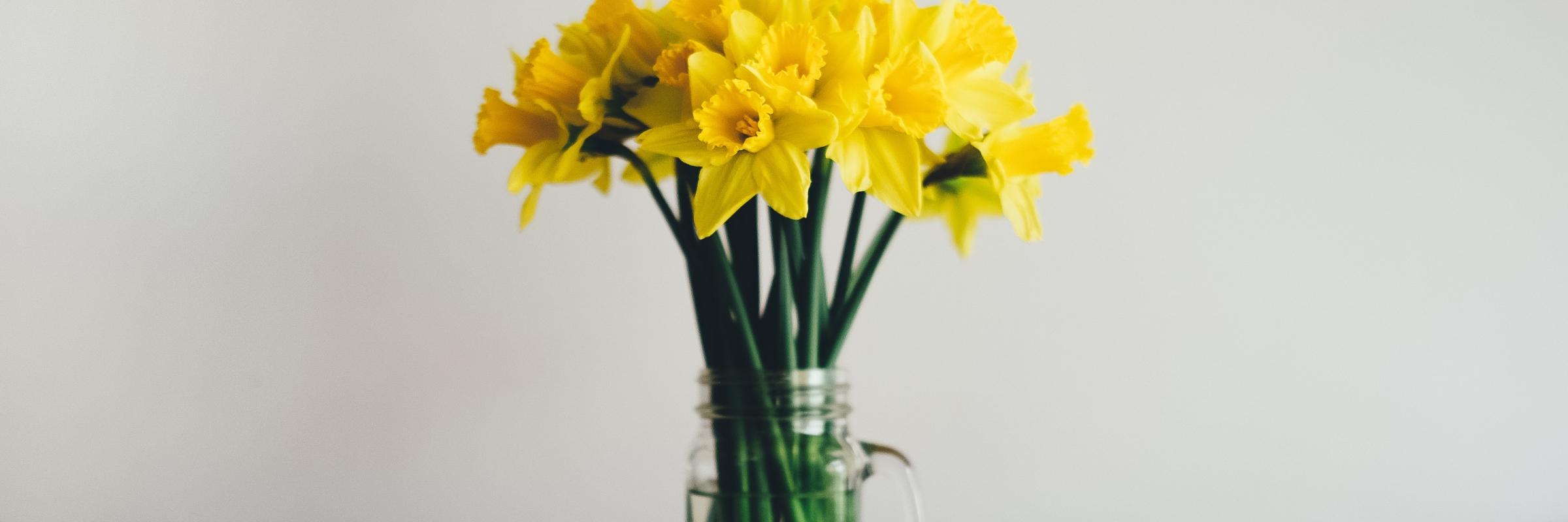 daffodils in jar
