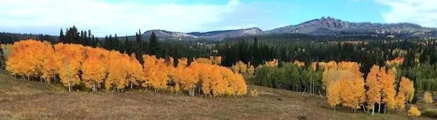 History of the Aspens