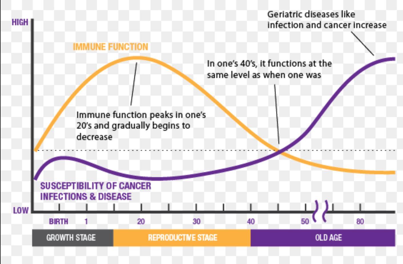 Human Biology And Immune System Primer