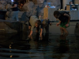 Ada and Liam love to touch the sharks.