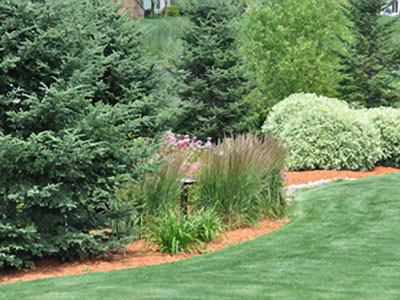lawn and landscape transition