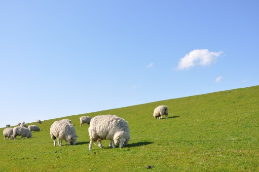 Are you feeding your flock a good diet of God's Word? (Images courtesy of pixabay.com)