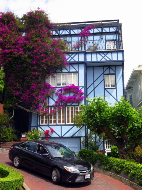 A pretty house with bright bougainvillea on Lombard Street. San Francisco, United States, North America.